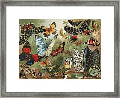 Butterflies 2 Framed Print by Mutzel