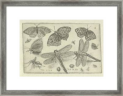 Butterflies And Dragonflies, Nicolaes De Bruyn Framed Print