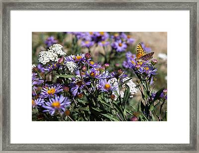 Butterflies And Wildflowers Framed Print by Christopher D Elliott