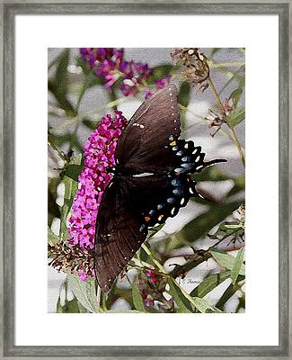 Framed Print featuring the photograph Butterflies Are Free by James C Thomas