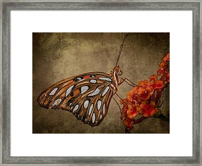 Framed Print featuring the photograph Butterflies Are Free by Linda Karlin