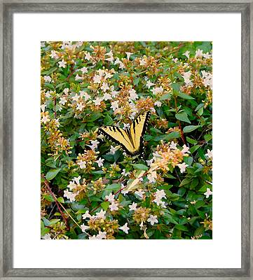 Framed Print featuring the photograph Butterflies Are Free by Roseann Errigo