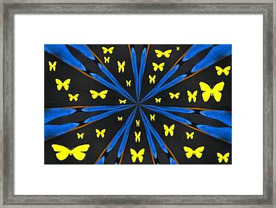 Butterflies Galore Framed Print by Karol Livote