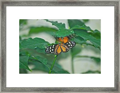 Framed Print featuring the photograph Butterflies Gentle Touch by Thomas Woolworth