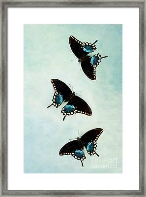 Butterflies In Flight Framed Print by Stephanie Frey