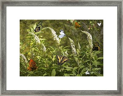 Framed Print featuring the photograph Butterflies In Golden Garden by Belinda Greb