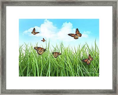 Butterflies In Tall Wet Grass  Framed Print by Sandra Cunningham
