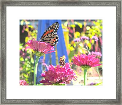 Butterflies In  The Garden Framed Print by Melinda Stogsdill