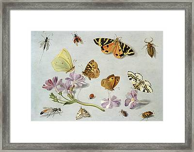 Butterflies Framed Print by Jan Van Kessel
