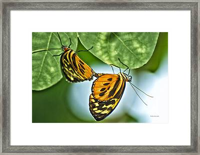 Framed Print featuring the photograph Butterflies Mating by Thomas Woolworth