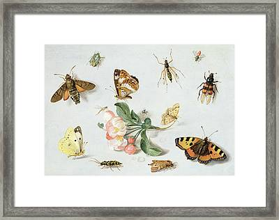Butterflies Moths And Other Insects With A Sprig Of Apple Blossom Framed Print by Jan Van Kessel
