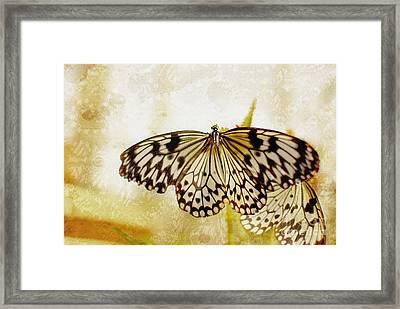 Butterflies On Lace Framed Print by Floyd Menezes