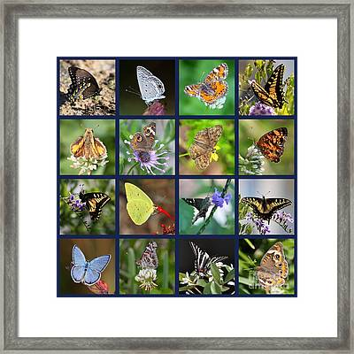 Butterflies Squares Collage Framed Print by Carol Groenen