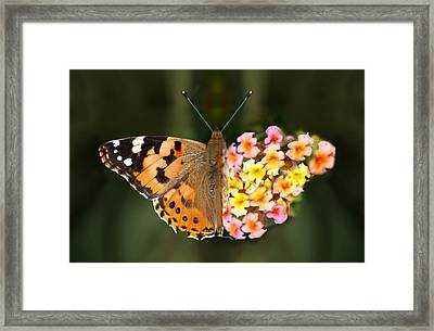 Butterflower Framed Print