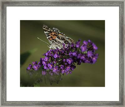 Butterfly 0001 Framed Print