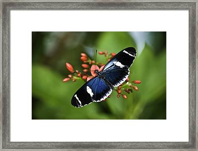 Butterfly 0002 Framed Print
