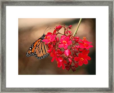 Framed Print featuring the photograph Butterfly 1 by Leticia Latocki