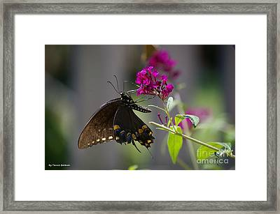 Framed Print featuring the photograph Butterfly 1 by Tannis  Baldwin