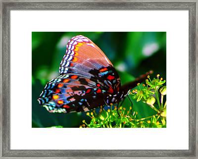 Butterfly 2 Framed Print by Kara  Stewart