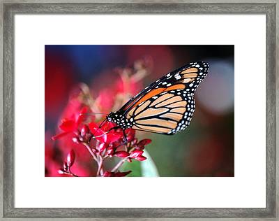 Framed Print featuring the photograph Butterfly 2 by Leticia Latocki