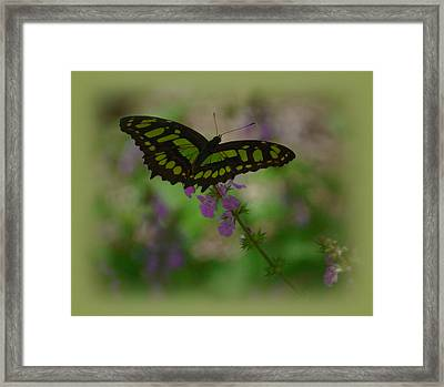 Framed Print featuring the photograph Butterfly 4 by Leticia Latocki