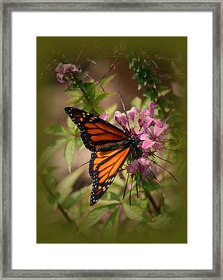 Framed Print featuring the photograph Butterfly 5 by Leticia Latocki