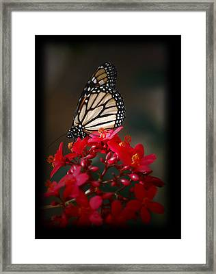 Framed Print featuring the photograph Butterfly 6 by Leticia Latocki