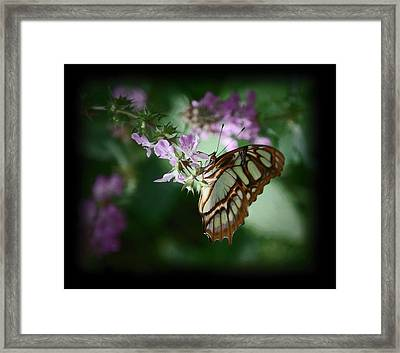 Framed Print featuring the photograph Butterfly 7 by Leticia Latocki