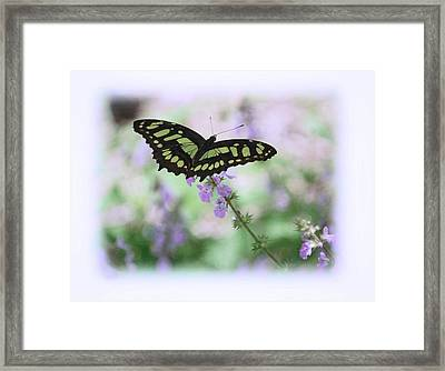 Framed Print featuring the photograph Butterfly 8 by Leticia Latocki