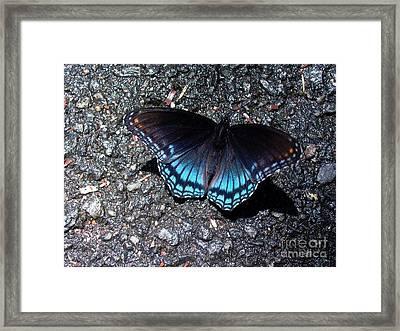 Butterfly And Asphalt Framed Print by Gerhardt Isringhaus