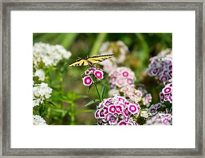 Butterfly And Bloom - Beautiful Spring Flowers And Tiger Swallowtail Butterfly. Framed Print by Jamie Pham