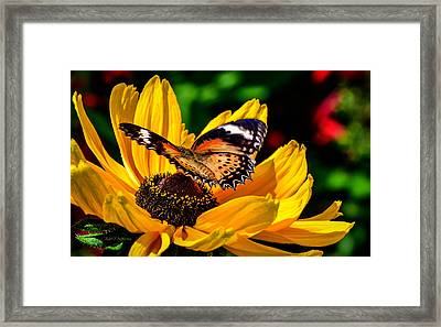 Butterfly And Bloom Framed Print by Julie Palencia