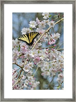 Framed Print featuring the photograph Butterfly And Blooms by Kenny Francis