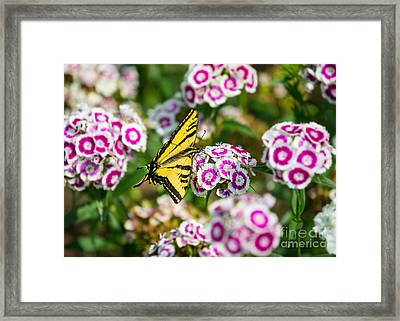 Butterfly And Blooms - Spring Flowers And Tiger Swallowtail Butterfly. Framed Print by Jamie Pham