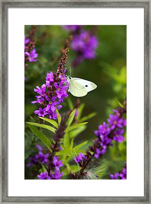 Butterfly And Bouquet Framed Print by Christina Rollo