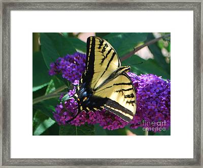 Framed Print featuring the photograph Butterfly And Bush by William Wyckoff