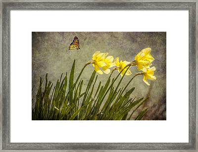 Butterfly And Daffodils Framed Print