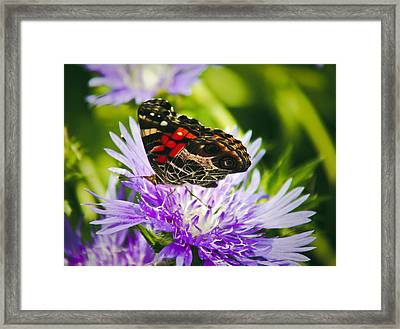 Framed Print featuring the photograph Butterfly And Flower by Debra Crank