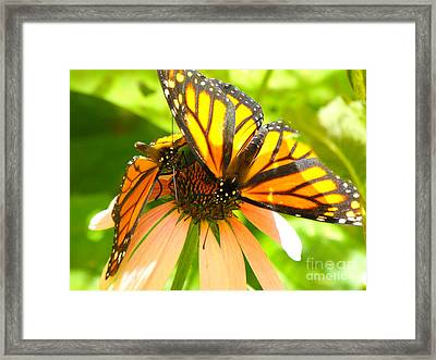 Butterfly And Friend Framed Print by Erick Schmidt