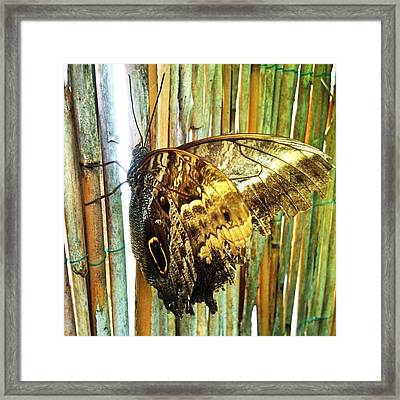 Butterfly And Light Framed Print by Beril Sirmacek