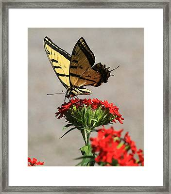 Butterfly And Maltese Cross 1 Framed Print by Aaron Aldrich