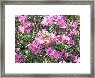 Butterfly And Pink Flowers Framed Print