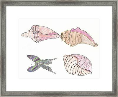 Butterfly And Seashells Framed Print