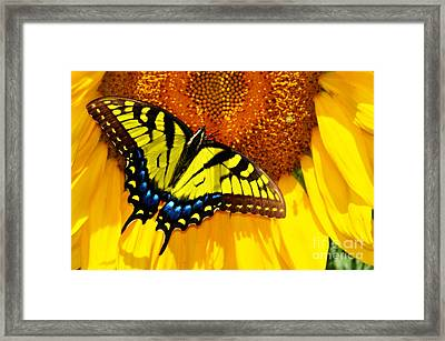Butterfly And The Sunflower Framed Print