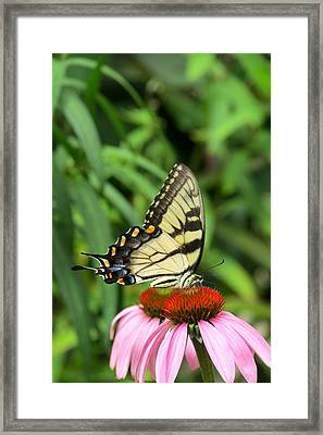Butterfly Framed Print by Andrea Dale