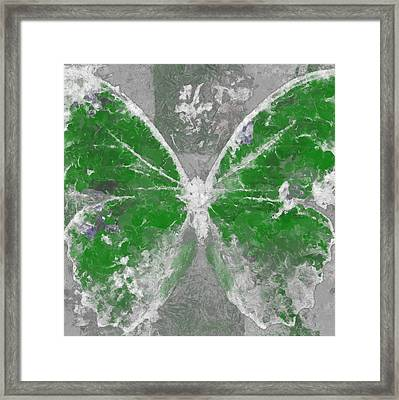 Butterfly Art - D04vb Framed Print by Variance Collections