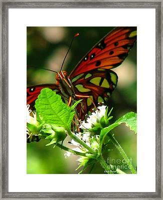 Butterfly Art Framed Print by Greg Patzer