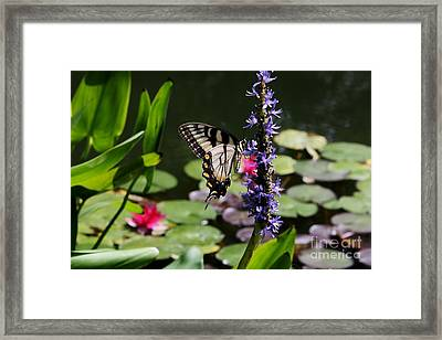 Butterfly At Lunch Framed Print by Marilyn Carlyle Greiner
