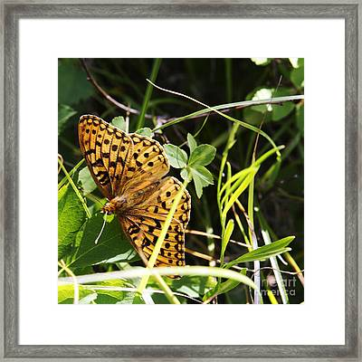 Framed Print featuring the photograph Butterfly At Signal Mountain by Belinda Greb