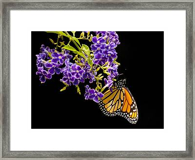 Framed Print featuring the photograph Butterfly Attraction by Phyllis Peterson